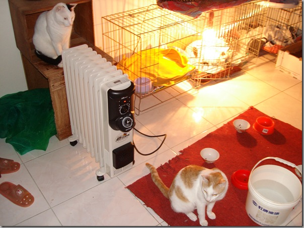 DSC02683 小貓聚到旁邊來…