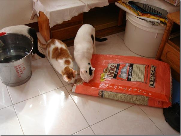 DSC02086 分裝完後的包裝,好像很好吃,很多貓跑來關心